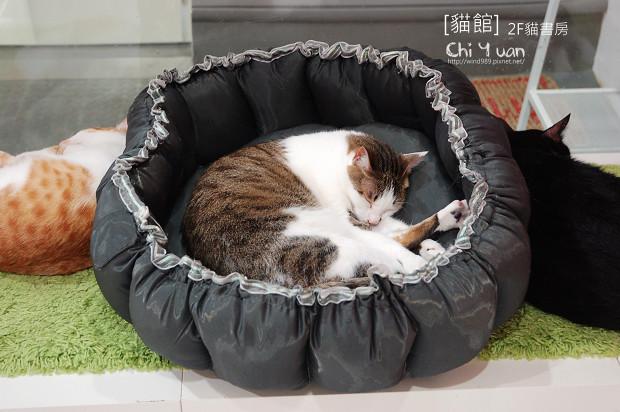 貓書房05.jpg