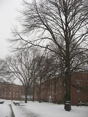 Residence campus under snow