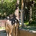 Los Angeles Zoo 052