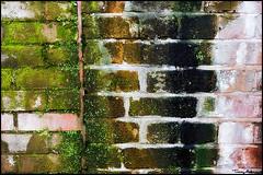 green (vcrimson) Tags: nottingham england green texture wall moss grunge bricks flickrmeet nottinghamshire upcoming:event=429454