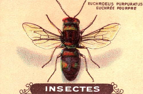 insecte 6