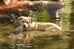 Minnie in the Pond - Ewww (lorijohernandez) Tags: family kids fun abeautifulevening lillysbirthdayparty