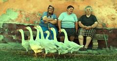 Portraits from Banat (AIeksandra) Tags: balkan rural village women geese texture serbia dobrica dacia glad