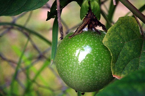 green passionfruit