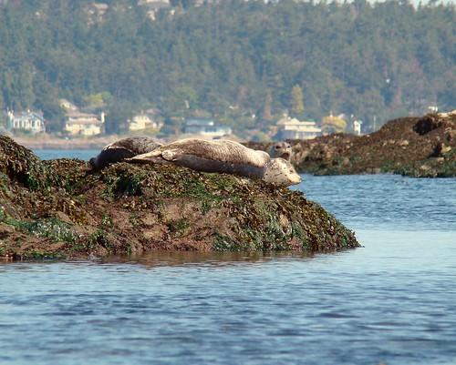 2008-08-03 Chain Islands 538