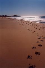 Narrabeen Beach, winter (jiulong) Tags: leica 28mm r3 narrabeen elmaritr