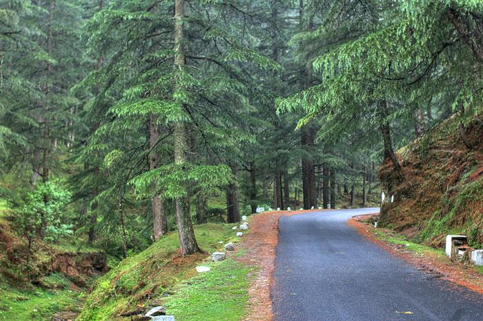 roads we choose // india, almora - jageshwar