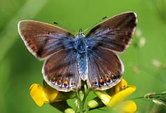 Motyl - Butterfly - Schmetterling (arjuna_zbycho) Tags: butterfly austria österreich olympus e3 baden niederösterreich schmetterling wienerwald badenbeiwien naturesfinest motyl rakousko ultimateshot biosphaerenparkwienerwald