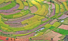fields (Z Eduardo...) Tags: nature island rice terraces madagascar mywinners fieds superaplus aplusphoto platinumheartaward flickraward flickraward5