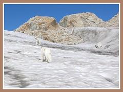 Chebodenhorn 056 (Shepherd & his Hot Dogs) Tags: panorama mountains alps schweiz switzerland landscapes hiking lakes bluesky berge climbing alpine glaciers alpen gletscher bergsee steep bergwandern gipfel summits steil rotondo bej golddragon pyreneanmountaindogs mywinners aplusphoto chebodenhorn pyrenischeberghunde shepherdhishotdogs gerenpass capannapiansecco kantonetessinundwallis cantonsofticinoandvalais allacqua chebodengletscher