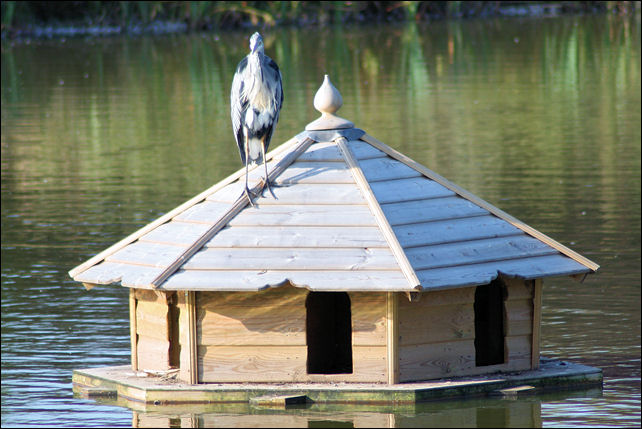 Heron on Duck House