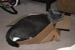 I has a box.