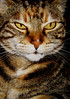 mittens (deekirby10) Tags: 1001nights furryfriends peopleschoice cc100 kissablekats bestofcats kittyschoice pet100 theperfectphotographer catnipaddicts alittlebeauty oscarsurrealeous oscarsurrealleouscoolcats