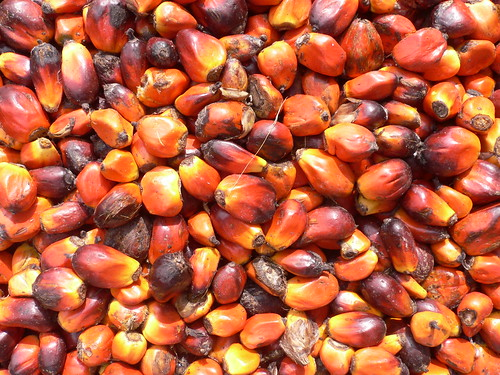 Jukwa Village & Palm Oil Production, Ghana