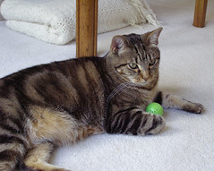 photo - Max with catnip ball (Jassy-50) Tags: max green cat ball photo mycat maximilian greenball catnipball