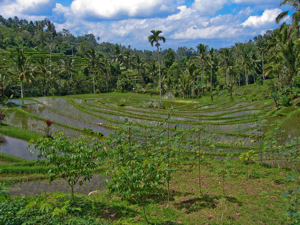 The World S Best Photos Of Bali And Risaia Flickr Hive Mind