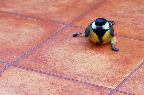 Vogel abgestürzt