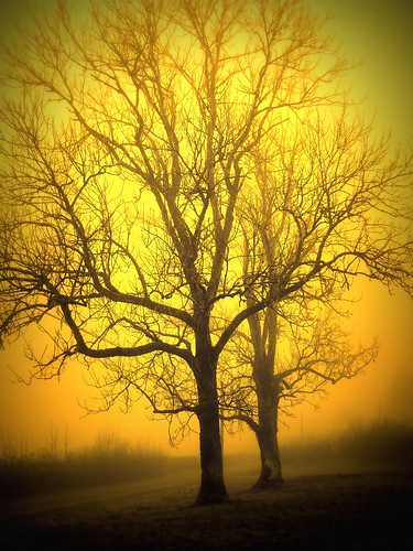 027 Trees in the fog by I Am Not I, on Flickr