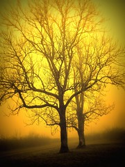 027 Trees in the fog (Nebojsa Mladjenovic) Tags: winter light sky orange sun sunlight mist france cold tree art yellow fog digital rural french outdoors lumix gold soleil frankreich europe burgundy hiver natur panasonic hidden ciel frankrijk paysage bourgogne francia arbre zima priroda brouillard picnik morvan francais fz50 drvo otw yonne svetlost magla sunce abigfave anawesomeshot aplusphoto theunforgettablepictures flickraward mladjenovic expressyourselfaward mygearandmepremium mygearandmebronze mygearandmesilver mygearandmegold mygearandmeplatinum mygearandmediamond
