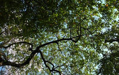 Nueva York en verdes