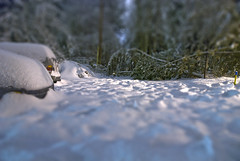 Trapped (Curtis Gregory Perry) Tags: car snow tree fallen lake oswego oregon winter tilt shift miniature fake model small tiny little train set ต้นไม้ strom pemë træ crann baum puu ツリー 树 樹 나무 पेड़ ağaç pohon дрэва дерево árbol ხე δέντρο arbo drzewo arbre tré árvore boom copac درخت شجرة עץ träd pokok drvo automóvil coche carro vehículo مركبة veículo fahrzeug automobil