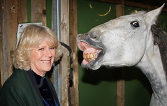 Britain Camilla, Duchess Of Cornwall
