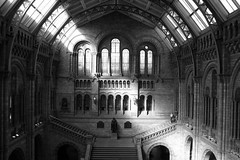 Natural History Museum (servuloh) Tags: pictures inglaterra england bw building london history window branco arquitetura museum architecture stairs canon buildings photography hall photo interesting europa europe museu foto natural interior main skylight picture pb preto powershot ceiling fotos e londres janela handrail escada histria corrimo canonpowershot teto g7 escadaria clarabia daylighting claraboia canong7 platinumphoto artofimages bestcapturesaoi doublyniceshot
