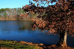 NC - Winter Colors at Lake Lucas (scott185 (the original)) Tags: nc northcarolina asheboro randolphcounty flickrgolfclub lakelucas lakelucascitypark