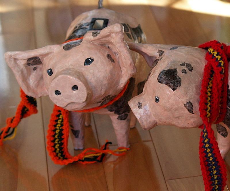 pig faces