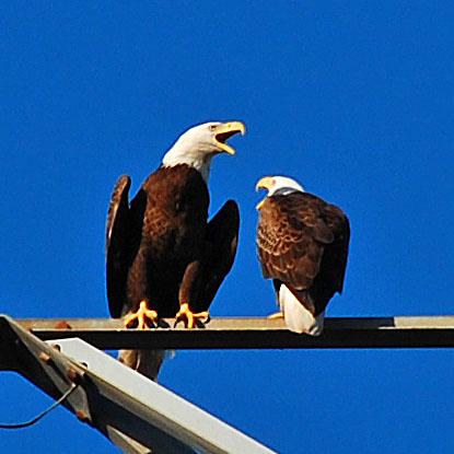 Screaming Eagles Excerpt