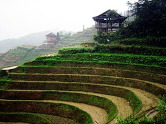 Dragon's Backbone Rice Terraces   (Melinda ^..^) Tags: china green field landscape rice farm terraces dragons mel crop melinda lanscape riceterraces backbone guangxi longsheng dragonsbackbone      aplusphoto chanmelmel