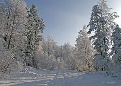 Zasnežena Parga 3. (natalija2006) Tags: winter snow nature slovenia zima soe natalija sneg blueribbonwinner narava supershot platinumphoto diamondclassphotographer theperfectphotographer vosplusbellesphotos naturescreations npisec
