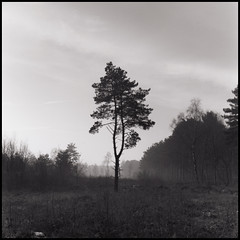 On My Own (Daren Smith) Tags: trees blackandwhite cold darkroom square woods kodak tmax yorkshire developer scanned prints lonely 100 own eastyorkshire 120rollfilm 123bw ilfordmultigrade autaut allerthorpe mediumformatbronicasqa