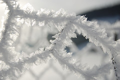 Eiskristalle am Zaun (icecrystals at fence) (Fotoelfe) Tags: winter white cold ice fence crystals wintertime zaun eis icecrystals klte weis kristalle eiskristalle