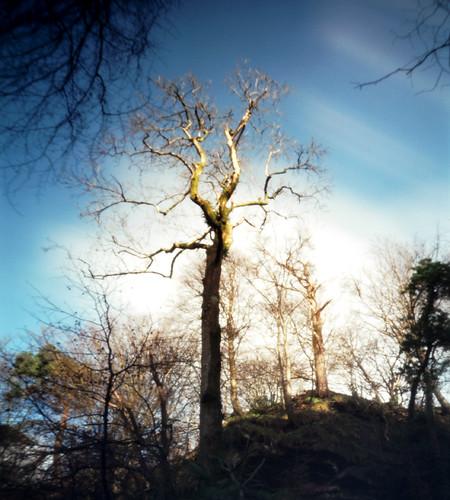 Tree and sky pinhole 30Jan09