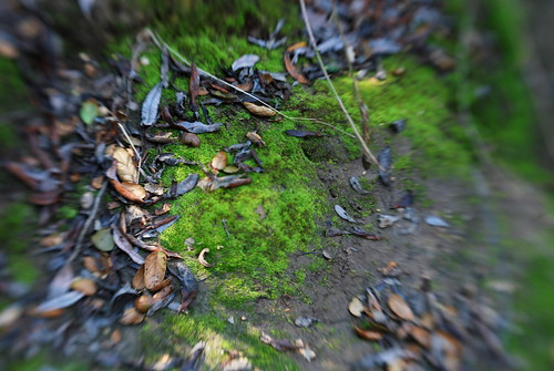 mossy by the banks