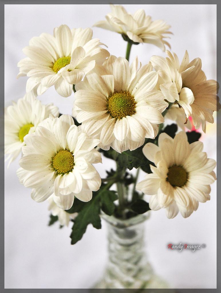 White Decorative Flower