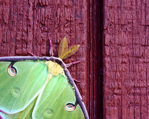 Mothra green 3
