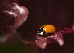 Lady Bug May 050130 copy