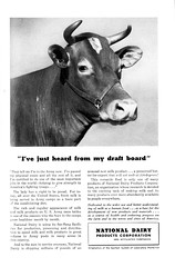 National Geographic Magazine Advertisement (Jasperdo) Tags: vintage magazine advertising cow wwii ad advertisement worldwarii 1942 nationalgeographic vintageadvertising draftboard vintagemagazine nationaldairyproductscorporation