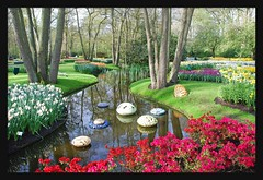 postcard (leuntje) Tags: flowers holland netherlands garden keukenhof earlyinthemorning bulbflowers lisse beforetherush moniquepalman