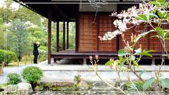 涉成園 The Shosei-en Garden by Windswept Duckweed
