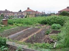 1st June 2006 (Dan K ™) Tags: uk london veg e17 2008 allotment plot walthamstow growyourown
