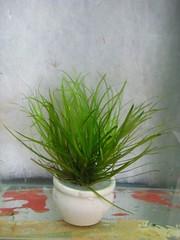 Thủy Sinh Tuấn Anh-Chuyên cây & Rêu Thủy Sinh, Cá Cảnh Biền & Hồ Cá Cảnh Biển - 38
