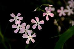 littleflowersmodifsm