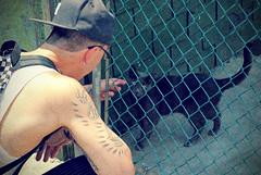 Black Cat (jami_lee) Tags: boy texture cat fence blackcat gate earring tattoos petting ehhh