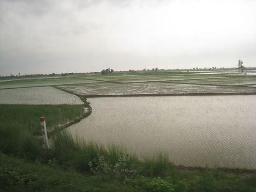 Rice paddies, a familiar site on my train rides