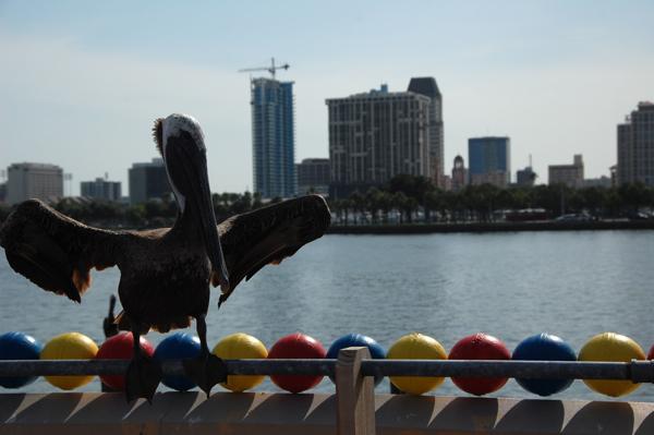 pelicanballs0295