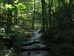deep dark hollers of Tennessee_5 (cdq3) Tags: outdoors photo tennessee streams brooks creeks natuer photonow