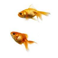 kingyo (3doel82) Tags: fish bird animals insect gambar koleksi ikan belajar burung binatang carnivora serangga mamalia amphibi